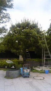 いちかわ大町霊園・梅の木