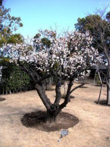 季節は「春」へ・・・