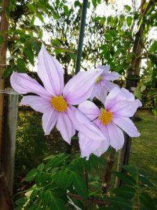 冬に咲く木木の花