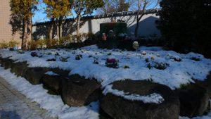 この冬、二度目の雪