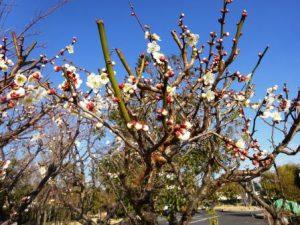 春はもうすぐそこまで・・・