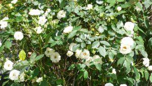 平成霊園の、この時期の花