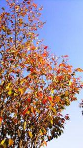 日に日に秋・・・